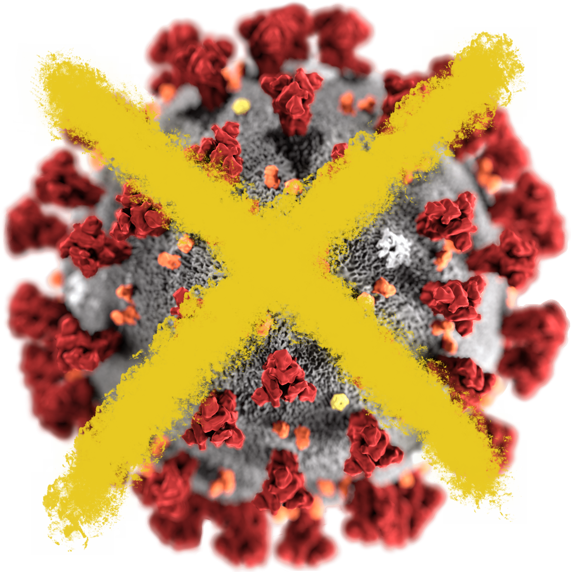 SARS-CoV-2_without_background-crossed